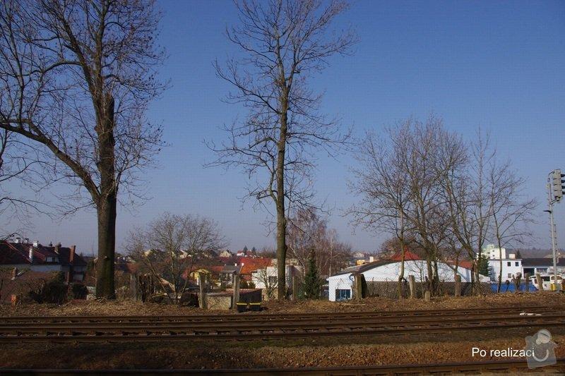 Rizikové kácení stromů: IMGP0079