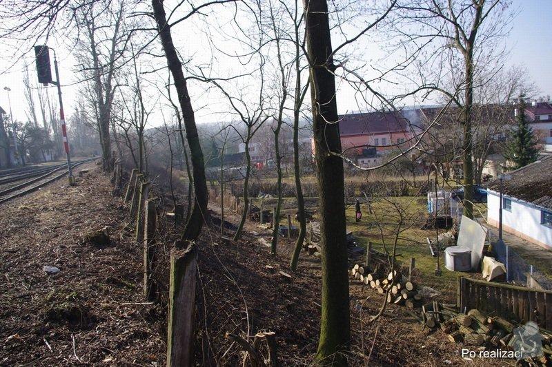 Rizikové kácení stromů: IMGP0084