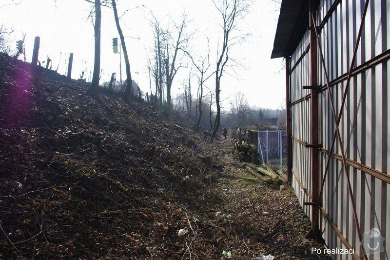 Rizikové kácení stromů: IMGP0086