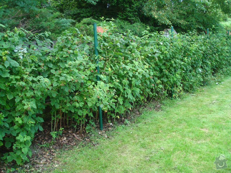 Zahradnicke sluzby- komplet podzimni udrzba : DSC08203