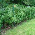 Zahradnicke sluzby komplet podzimni udrzba dsc08203