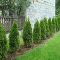 Zahradnicke sluzby komplet podzimni udrzba dsc08211