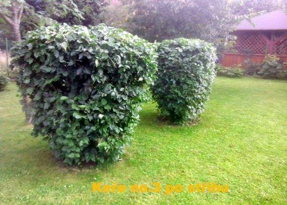 Celková údržba zahrady