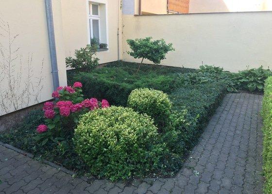 Úprava zahrady, řez živého plotu a ostatní zeleně.