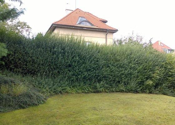 Zahradník - ostříhání živého plotu - Ptačí zob