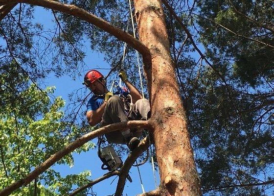 Prořezávka stromů Domov důchodců Napajedla