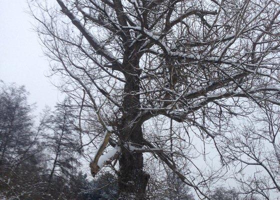 Rizikové kácení stromu