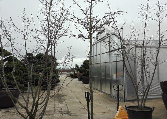 Převezení ovocných stromků