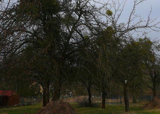 Kácení 11-ti starých jabloní