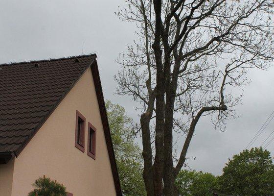 Řez stromů
