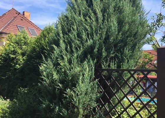Pokácení jehličnanu na zahradě