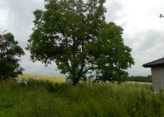Zhodnocení stavu a ořez, příp. skácení stromu