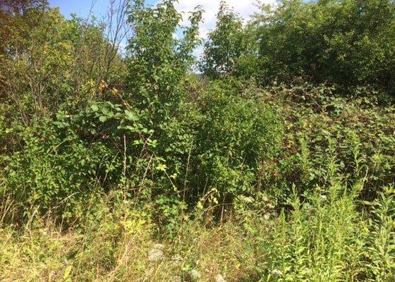 Sekání vysoké trávy plus vysekání maliní