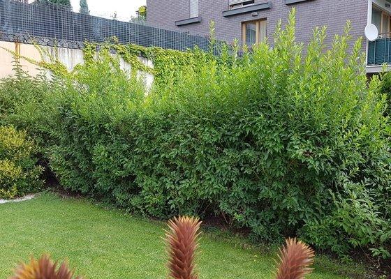 Zahrada - mensi udrzba