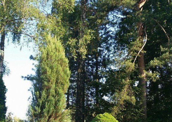 Odstranění zlomených větví po bouřce