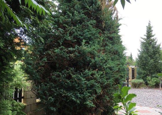 Kácení stromů, keře včetně odvozu