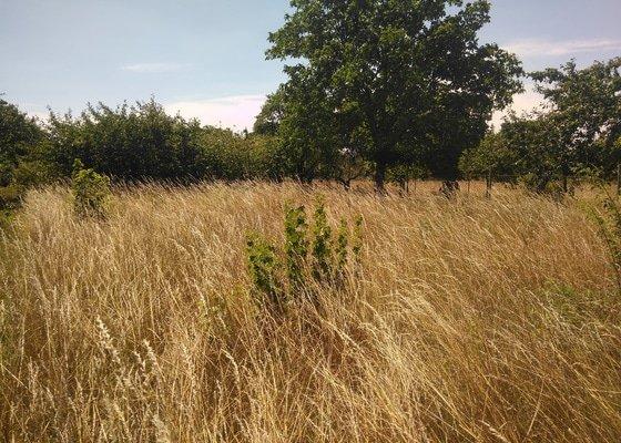 Sekání zahrady a odstranění náletů - Majetín