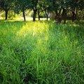 sekání vysoké trávy
