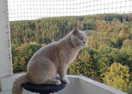 Zasíťování balkonu včetně sítě