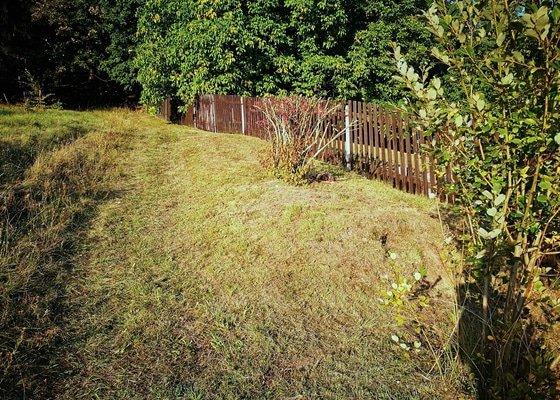 Ostříhání živého plotu plus posekání zahrady