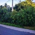 ostrihani-prerostleho-ziveho-plotu_IMG_20180724_064757