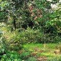 vycisteni-zahrady_IMG_20180728_074611