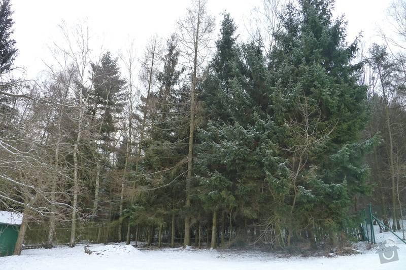 Kácení 20 stromů: P1060410