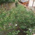 Revitalizace zahrady cimg0045