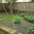 Revitalizace zahrady cimg0047