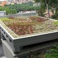 Zelena vegetacni strecha 115 gall