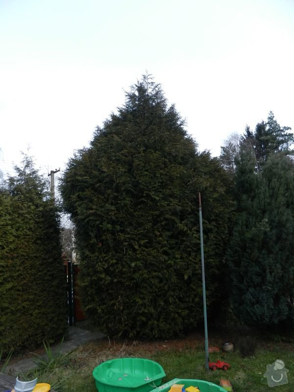 Zahradnicke prace - rez thuji: pred3