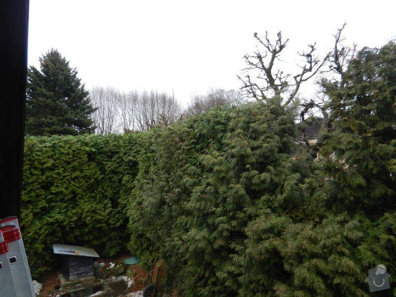Zahradnicke prace - rez thuji: po1