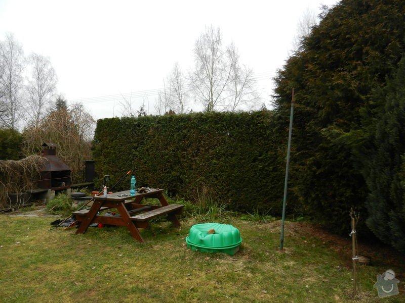 Zahradnicke prace - rez thuji: po2
