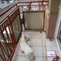 Stavebni prace oprava balkonu p3310170