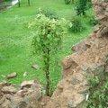 Oprava plotu pu 1. 2.6.2013 063