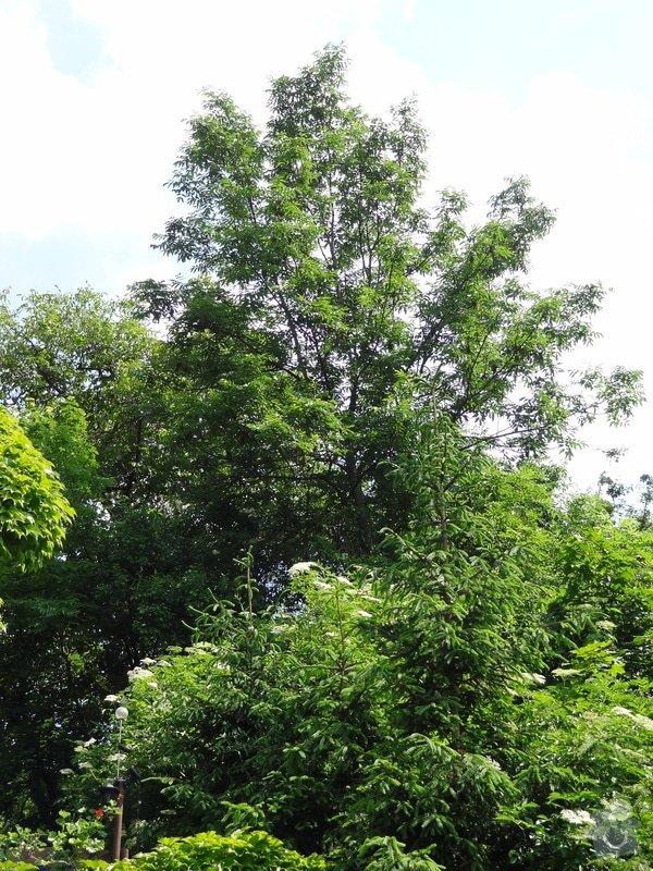 Pokácení stromu cca 15m vysokého: DSC04064