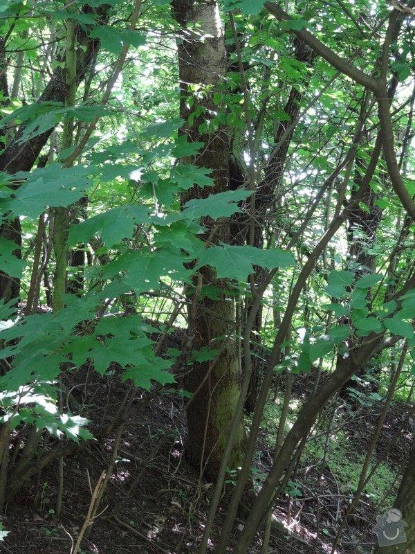 Pokácení stromu cca 15m vysokého: DSC04066