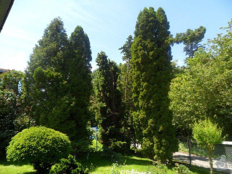 Zahradnické služby,údržba jehličnanů: SAM_2655