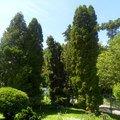 Zahradnicke sluzby udrzba jehlicnanu sam 2655
