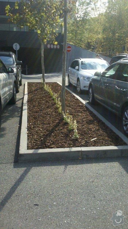 Obnova záhonů na parkovišti, Obnova provizorního chodníku, Průmyslové zmlazení porostů a Zastřižení keřových skupin na parkovišti u BB Centra: 2012-10-09_13-31-58_148