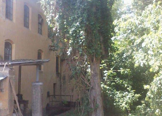 Kácení stromů (2 ex. topol)