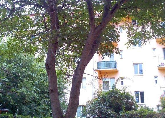 Prořezání dvou stromů (třešeň, ořech) u bytového domu