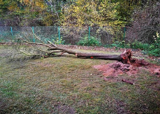 Vertikutace + hnojení trávníku, vykácení nevhodných dřevin, vykopání pařezů