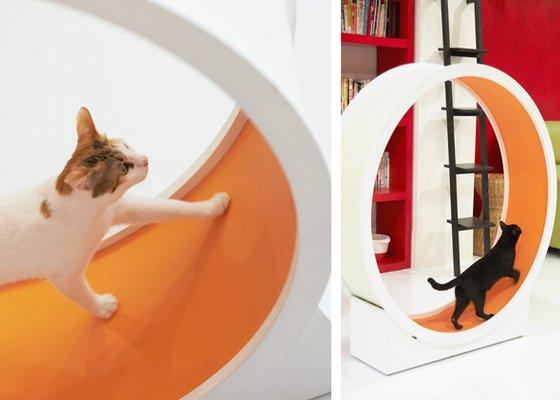 Kolo na běhání pro kočku