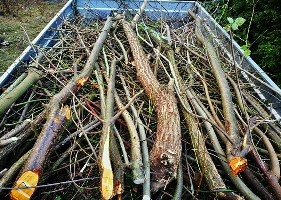 Vyčištění zahrady, střih keřů, odstranění náletových dřevin, kompletní úklid + odvoz odpadu, vykopání pařezu.