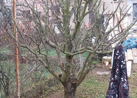 Prořez 4 stromů