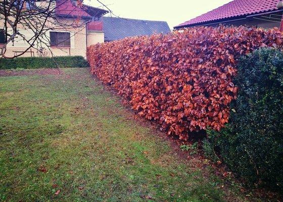 Razantní zkrácení živého plotu