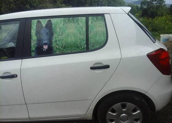 Výroba polepu na zadní okna vozu s motivem domácího mazlíčka