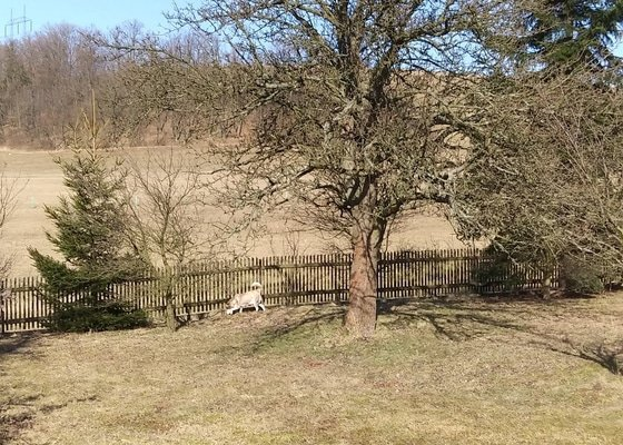 Pokácení 2 stromů (jabloň, hruška)