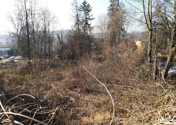 Likvidace náletových dřevin a příprava pozemku na stavbu